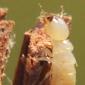 http://news.engr.uconn.edu/wp-content/uploads/2011/10/termite1.jpg