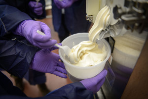 Chemical engineering majors make a test batch of reduced sugar ice cream at the UConn Creamery on April 8, 2015. (Peter Morenus/UConn Photo)